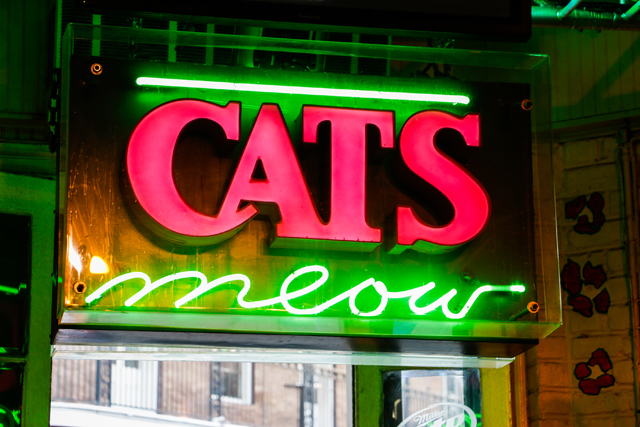 cat u0026 39 s meow