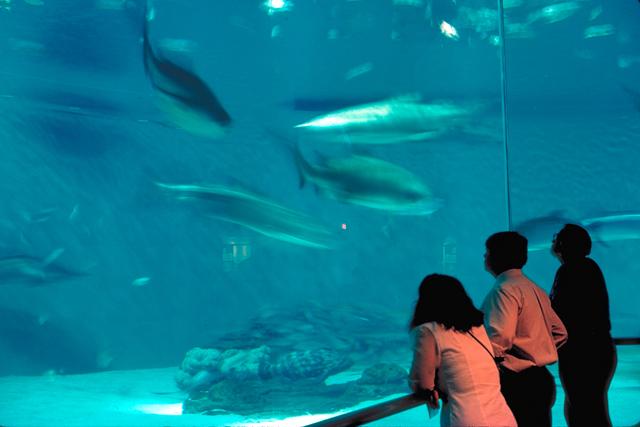 Audubon Aquariu...