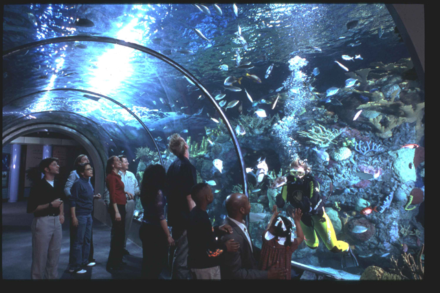 Audubon Aquarium Of The Americas New Orleans Attraction