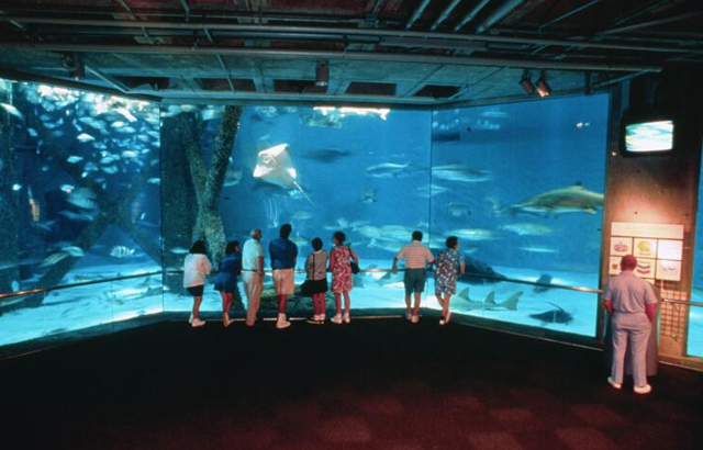 Audubon Aquarium of th...
