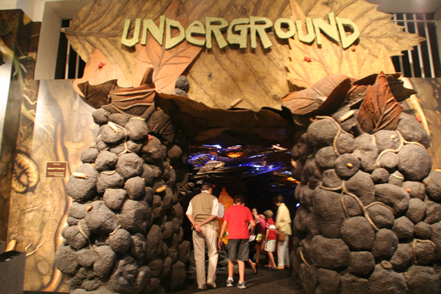 Hotels In New Orleans >> Audubon Butterfly Garden and Insectarium | New Orleans ...